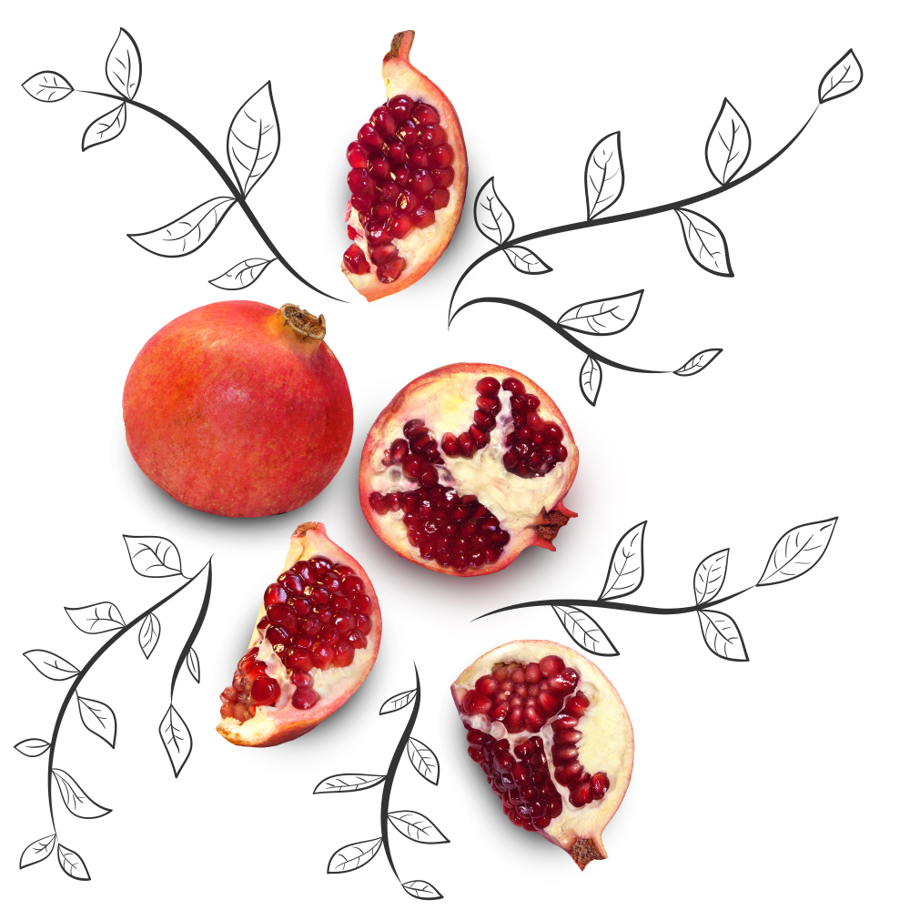 Picture of several pomegranates with drawn stems and leaves around them.