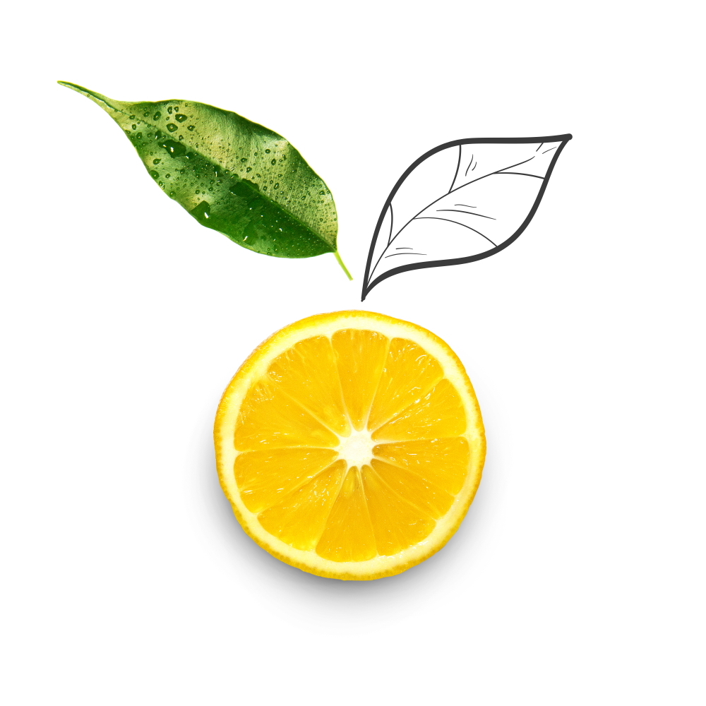 Picture of sliced lemon with leaves at the top.